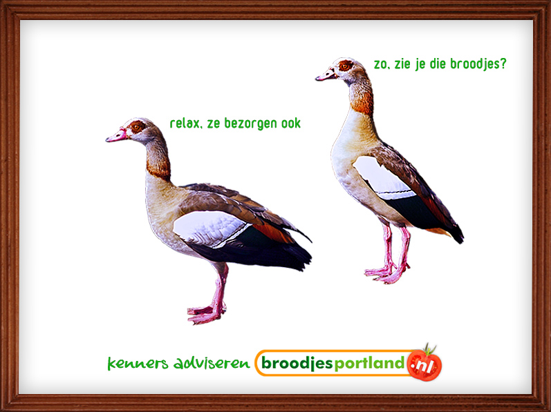 GEM broodjes viewer 2 birds